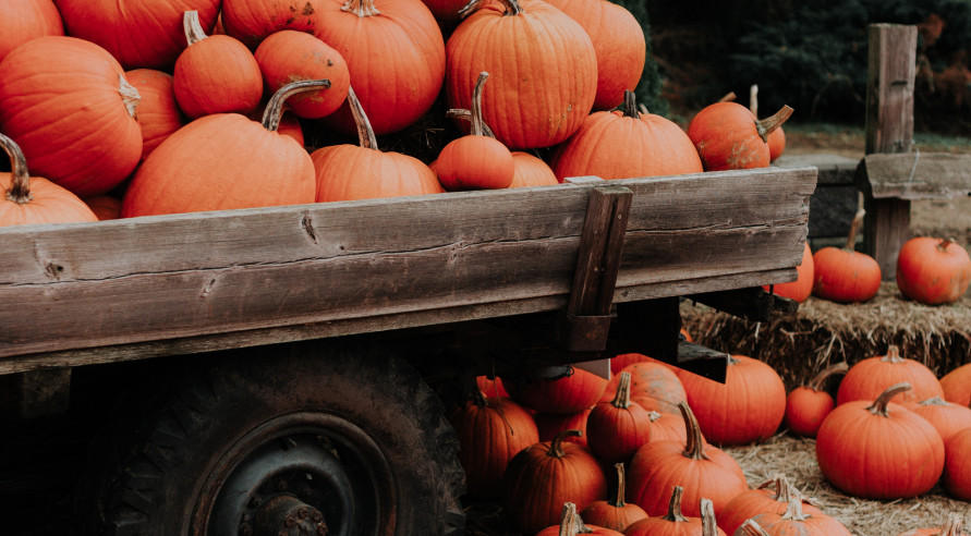 """<strong><span style=""""font-size:18px""""><span style=""""font-family:garamond,baskerville,baskerville old face,hoefler text,times new roman,serif""""><span style=""""color:#FF8C00"""">16 Wabash Valley Pumpkin Patches and Corn Mazes</span></span></span></strong>"""